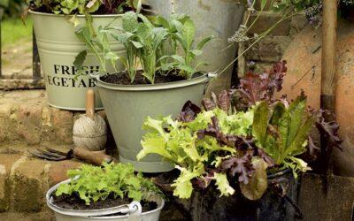 hangolunk, hangolódunk a Gardenexpora