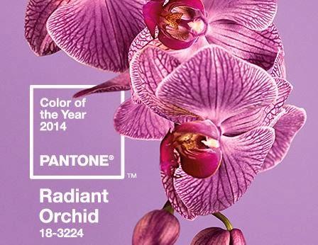 Ragyogó orchidea